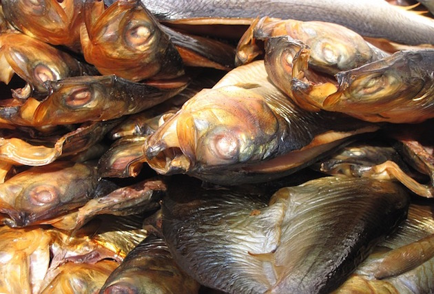 「フィレオフィッシュ」の材料が変わる?NZの漁業スキャンダル