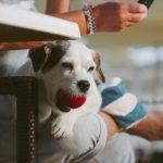 海外のペット事情ってどうなの?犬の英会話