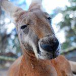 オーストラリアの祝日とオーストラリアのホリデー観