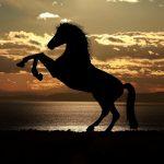 【英語記事】野生の馬は絶滅した!?驚きの記事で英語学習