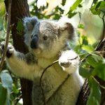 オーストラリアの動物を想像しながら英語で話してみよう!