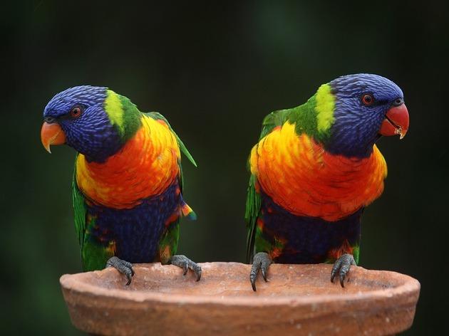 ケアンズなら、1日で1年分の鳥がイロイロ見られるかも!