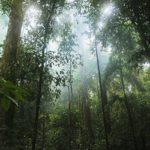 ケアンズの2大世界遺産のうちの一つ熱帯雨林はどこにある、いつからある~?