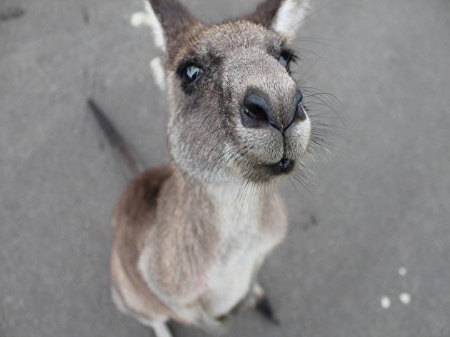 オーストラリアのテレビ番組って面白いんでしょうか?